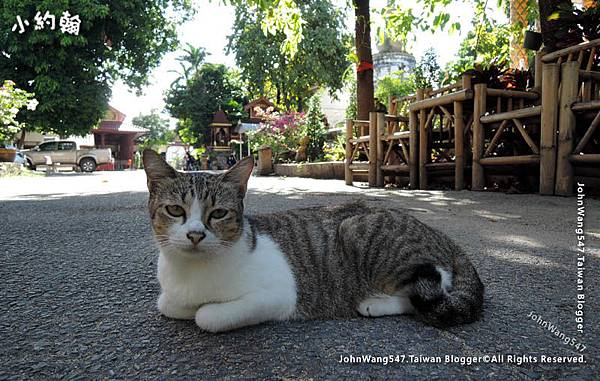 Cat in Lam Chang Temple Chiang Mai.jpg