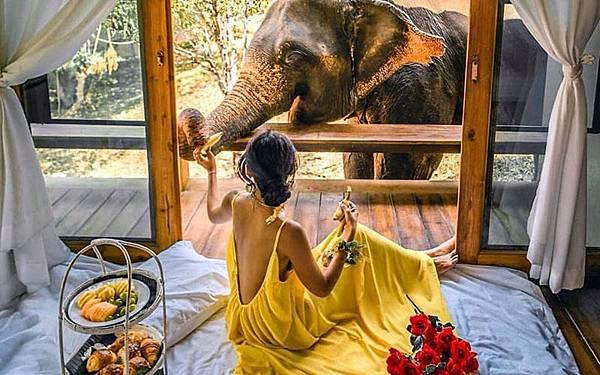 Chai Lai Orchid Elephant Camp Photos5.jpg