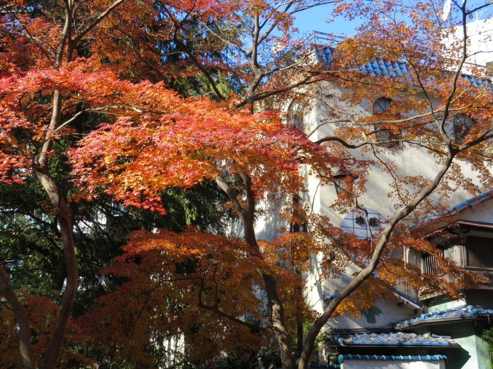 Blog 19 IMG_5285