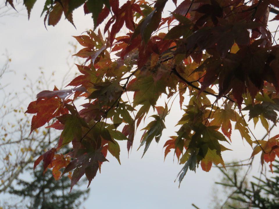 Blog 10 IMG_8438.jpg