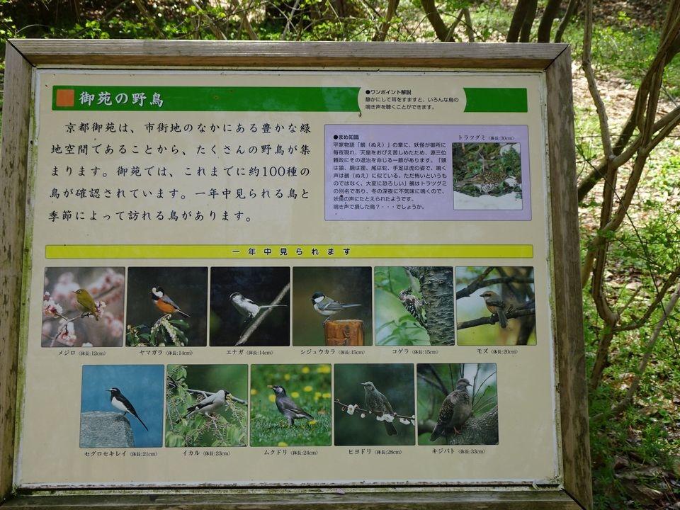 Blog 11 DSC01726.jpg