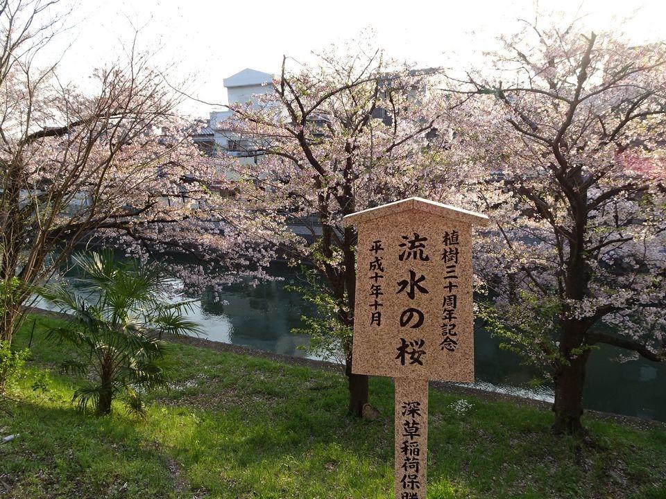 Blog 12 DSC01910.jpg