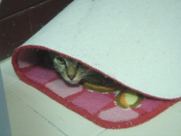 在地毯下玩躲貓貓