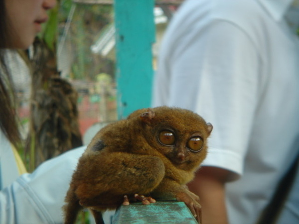 01.28-薄荷島-眼鏡猴18.jpg