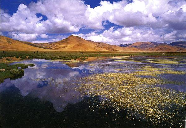 西藏(芷嫣)0815