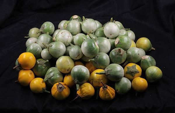 黃水茄-果實.jpg