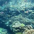 好多珊瑚呀~