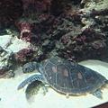 龜龜也好可愛
