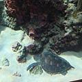 有海龜也!!!
