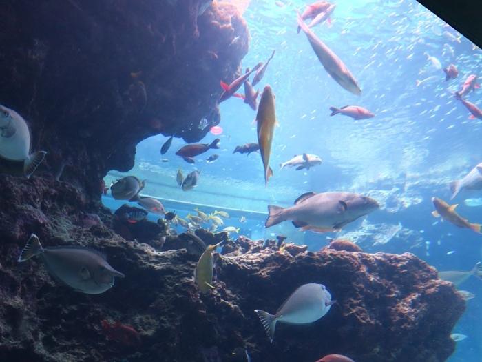 有很美的魚