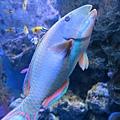 這隻魚好美~