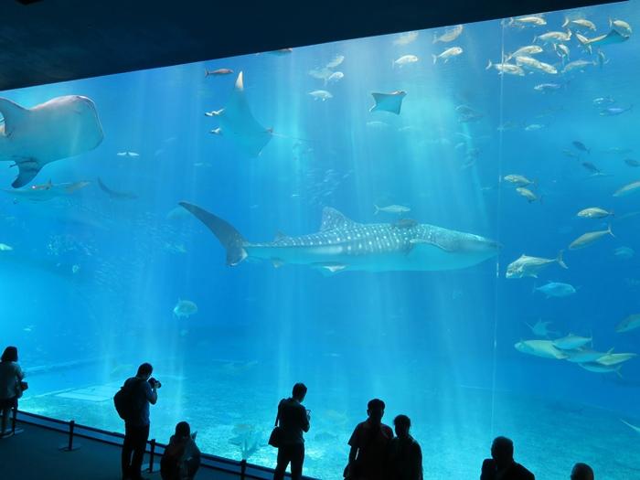 這兒有三隻很大的鯨鯊