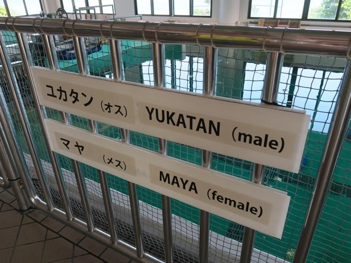 這缸兩隻的名字