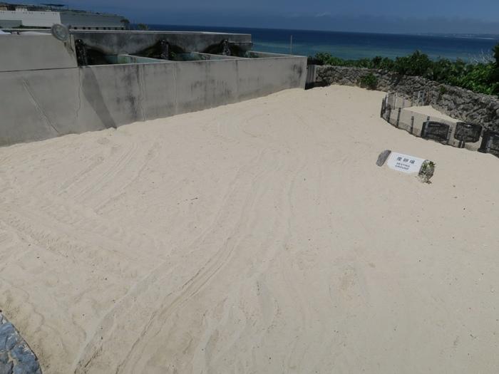 沙灘上是產卵區