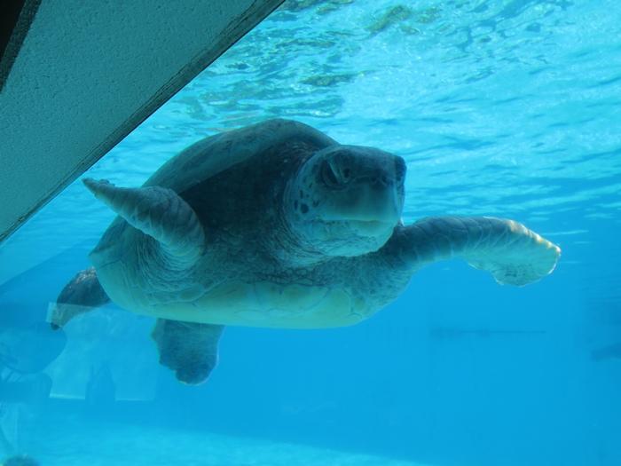 龜龜的臉嚴肅得好可愛