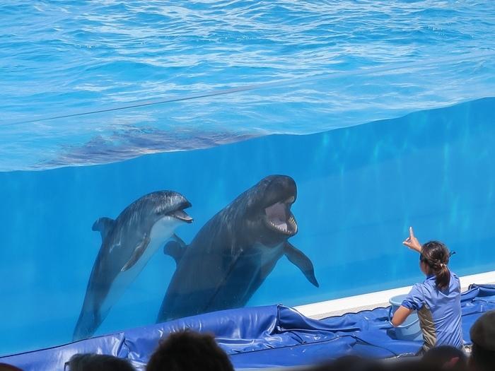 海豚笑起來真好看