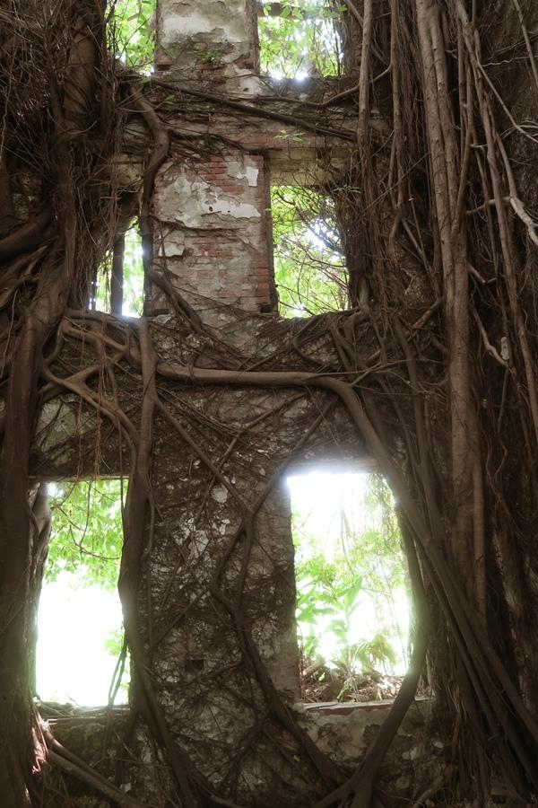 被樹緊緊地包圍住了