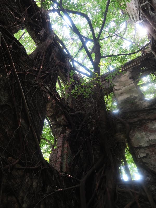 跟台南的樹屋有點像也
