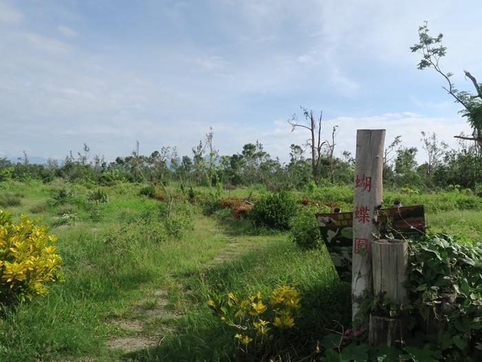 左前方有好大一片,是蝴蝶復育區