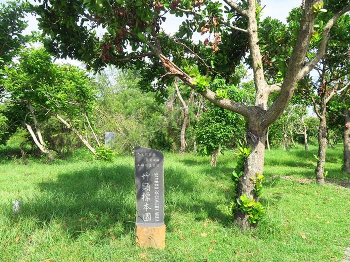 對面就是竹類標本園(630M)