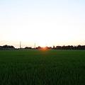 稻田中的夕陽