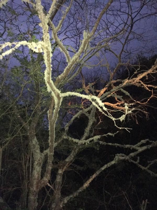 超冷的,樹上都有霜