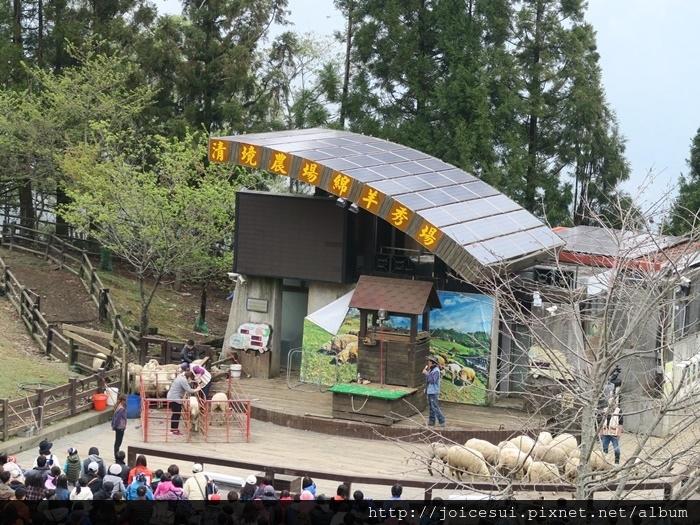 幸運觀眾來分羊