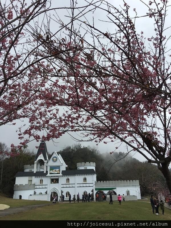 櫻花底下的城堡