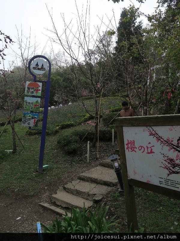 往上可接楓林步道和落羽松步道