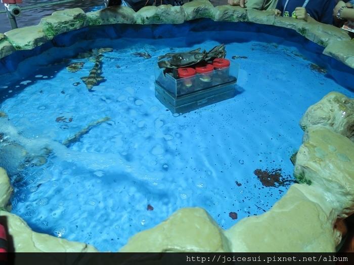 池子裡有兩種鯊魚