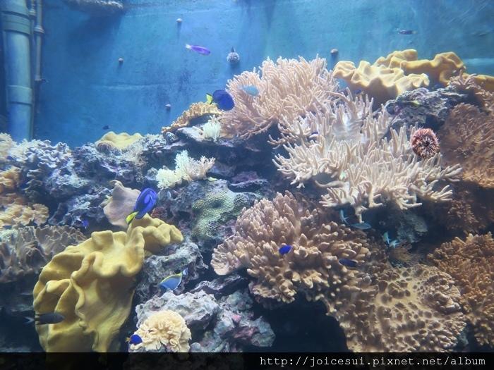 開始介紹珊瑚