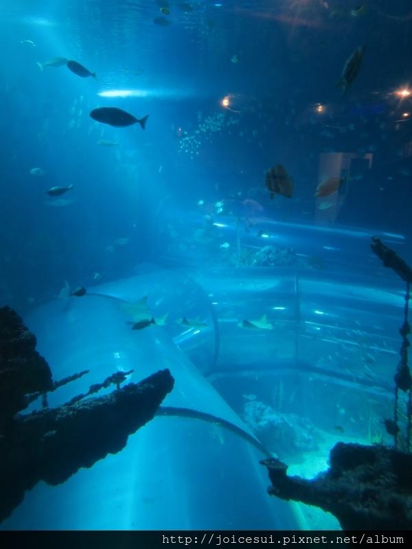 沉船區可以看到底下的海底隧道