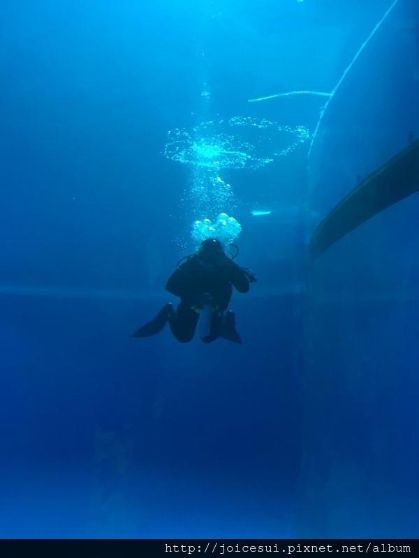 潛水員跟我們打招呼