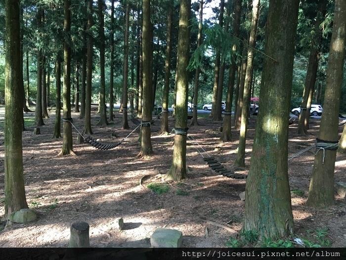 林子裡有好多吊床