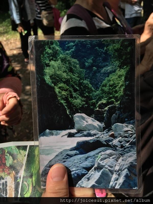 青蛙石的照片!