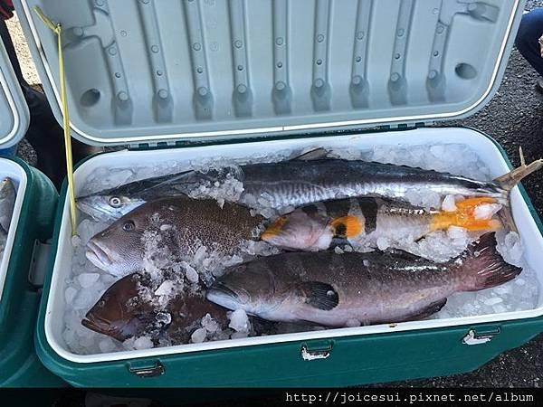 一堆從未看過的魚~