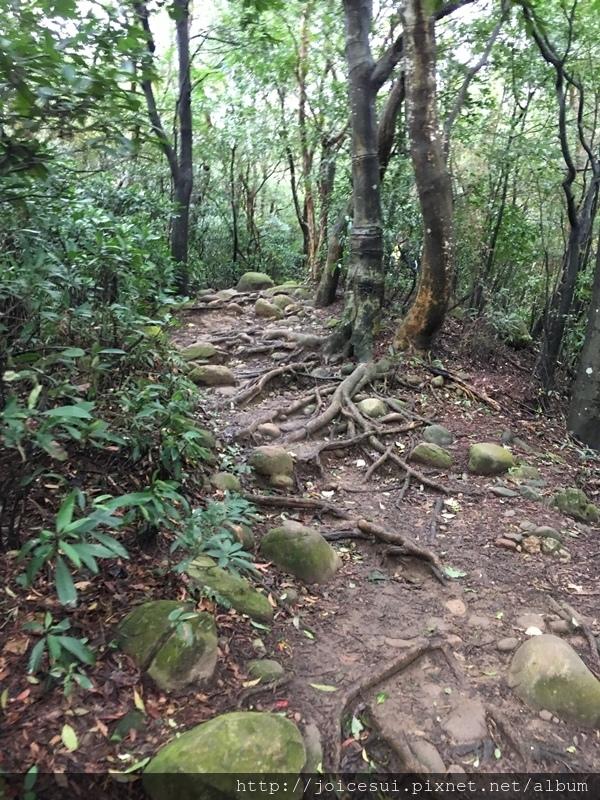 此段路有些小下坡