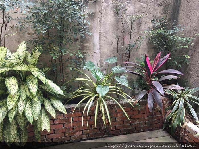 有一些植物