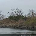 一開始還真以為岸上這些是假鳥XD