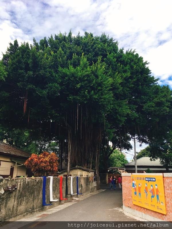 好大的榕樹