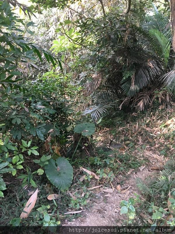 往右邊樹林走進去