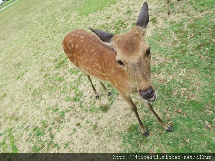 小鹿好可愛