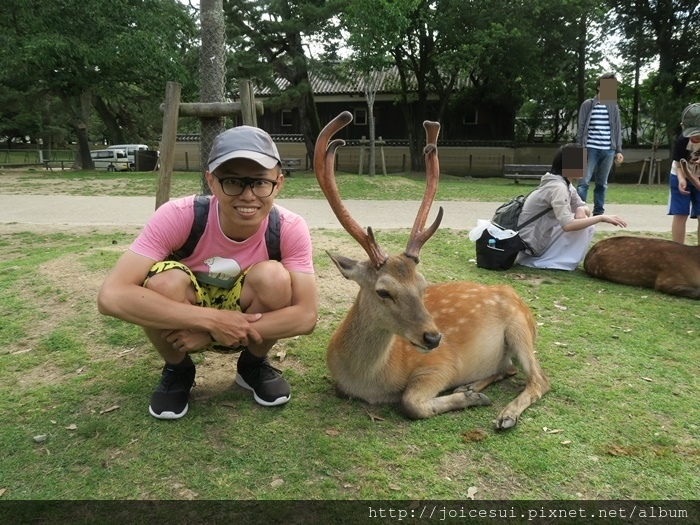 這一批鹿很好拍
