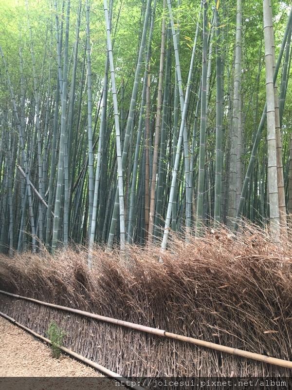 看到有竹子就知道快到了