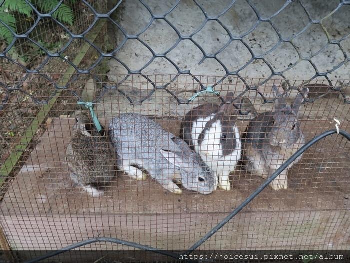 一直討吃的兔兔