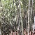 兩旁都是竹子