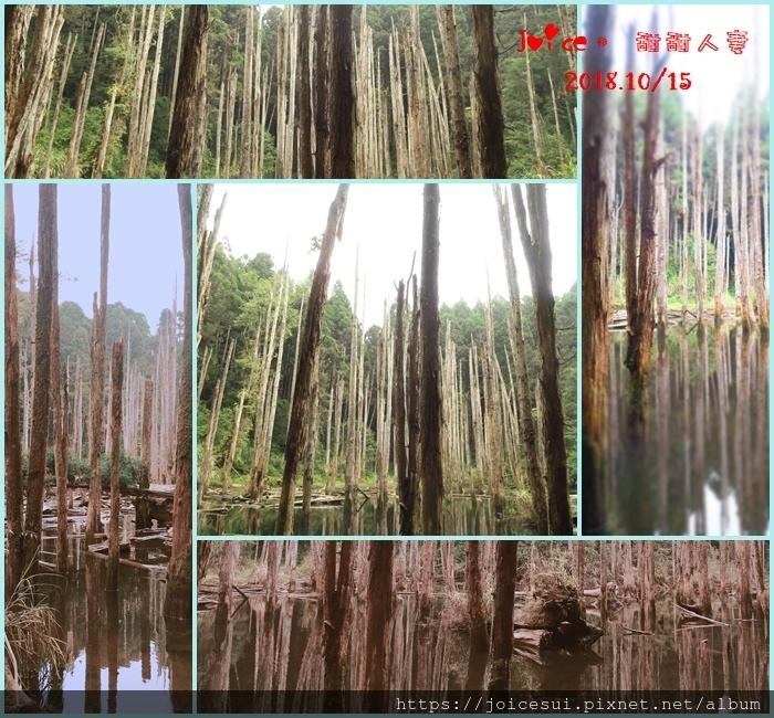 10%2F15 忘憂森林