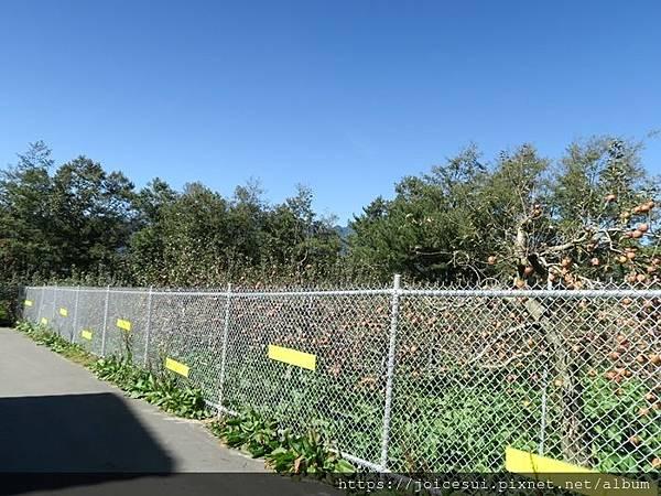 這邊的鐵欄杆好高好擋風景