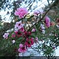 粉紅小花很可愛
