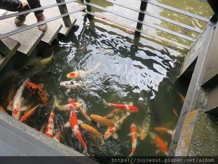 這一區可就近餵魚